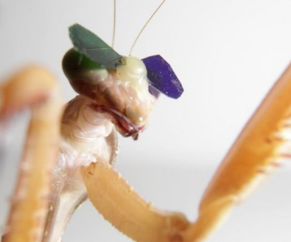 Praying Mantis Gets 3D Glasses in Coolest Scientific Test Ever