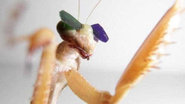 mantis-3d