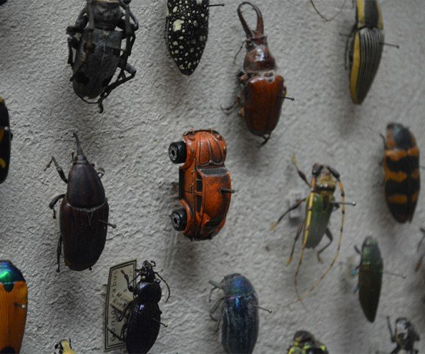 Wall of Bugs Has a Volkswagen Beetle