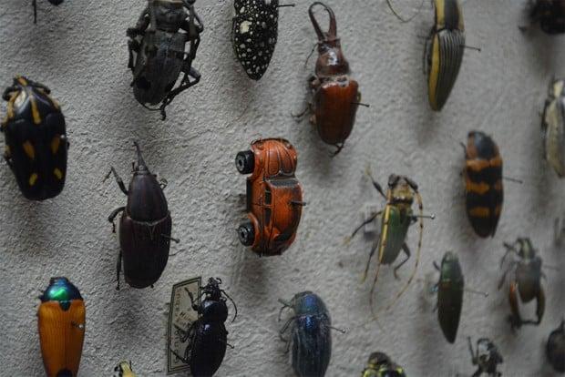 museum-bug