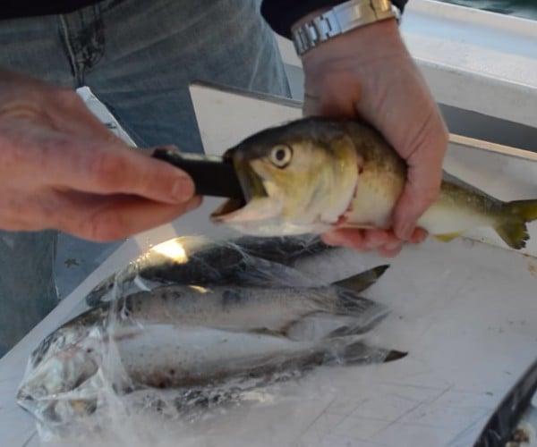 Zombait Robotic Fishing Lure Makes Dead Bait Move: The Swimming Dead