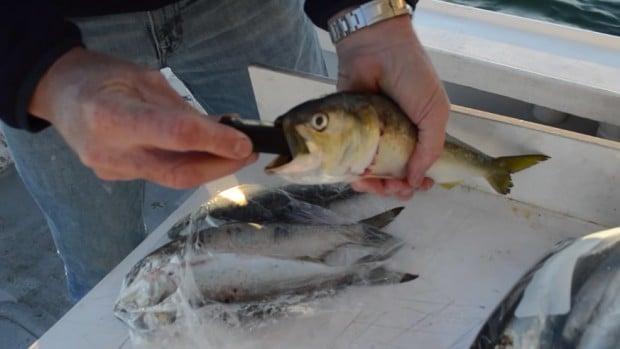 zombait_robotic_fishing_lure_1