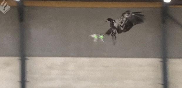 eagle-drone-tb
