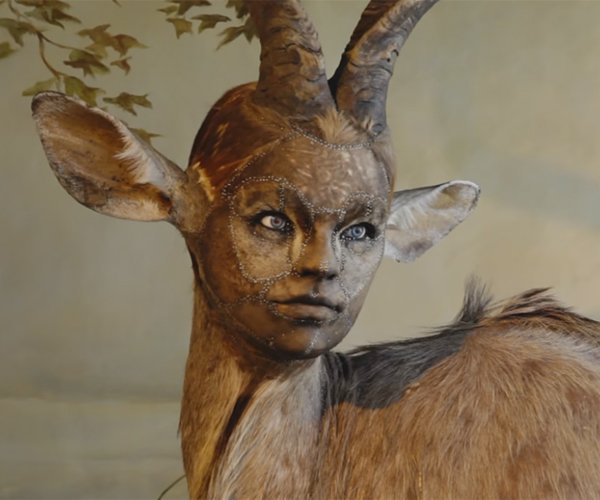 Kate Clark's Human-Headed Taxidermied Animals: Zooanthropomorphism