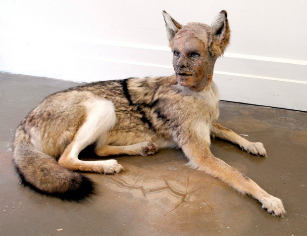 kate_clark_taxidermy_sculptures_5