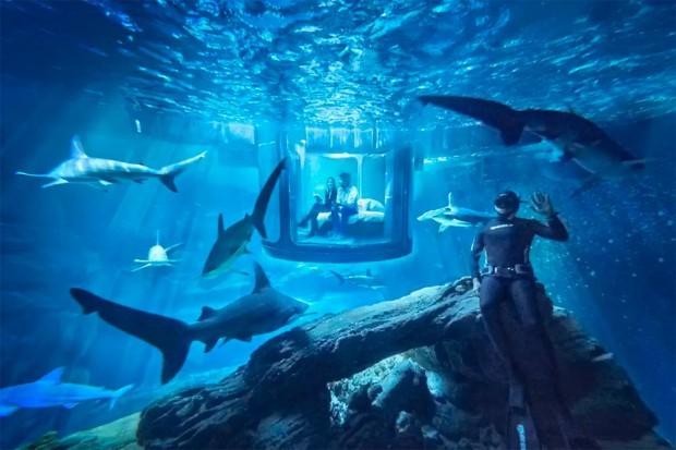 airbnb_shark_room_2