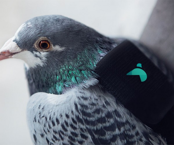 Pigeons Carry Tiny Sensors in Adorable Backpacks to Monitor London Pollution