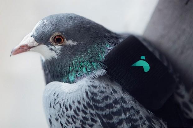 bird-sensor-1