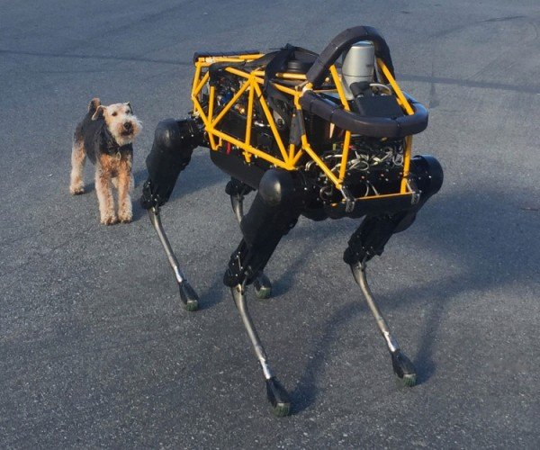 Dog Meets Boston Dynamics Robot in a Parking Lot: Spot vs. Spot