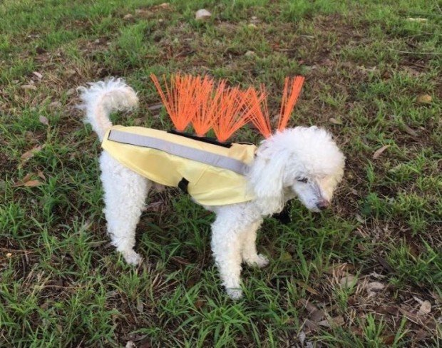 dog_vest_4