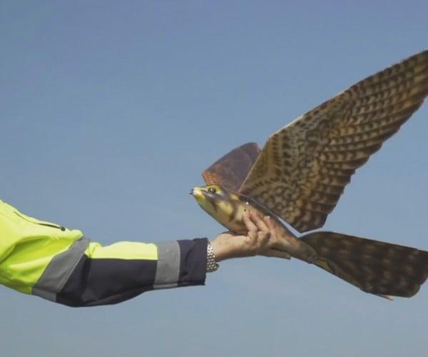Robotic Birds That Scare Away Real Birds: Botrification