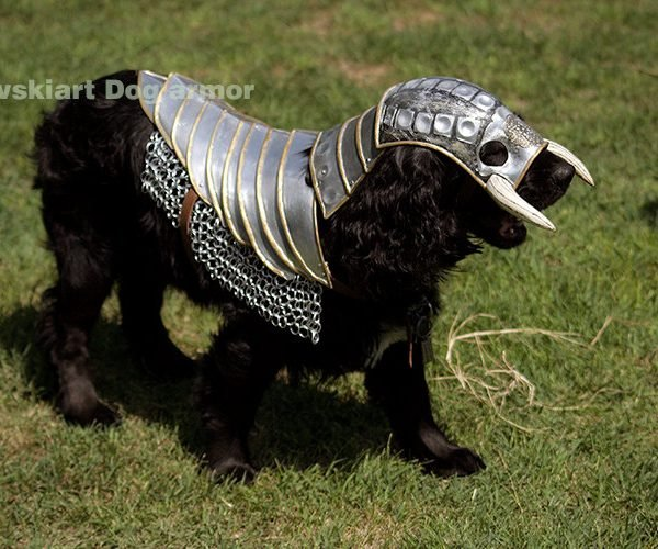 Battle Armor for Your Dog