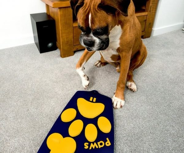 World's First TV Remote for Dogs