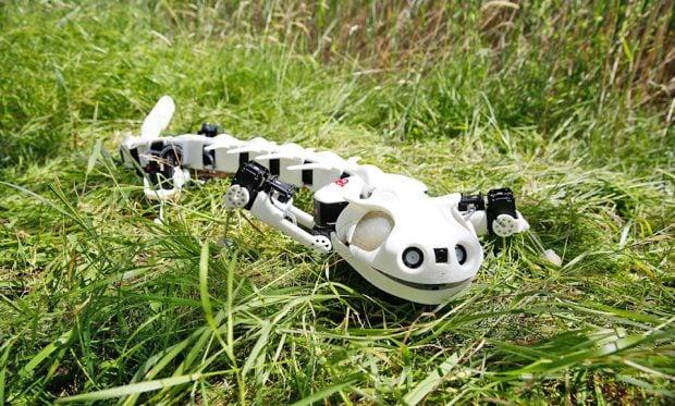 salamander_robot_1