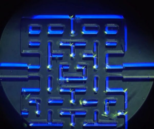 Microorganisms Play in a Pac-Man Maze: Protozoan-Man