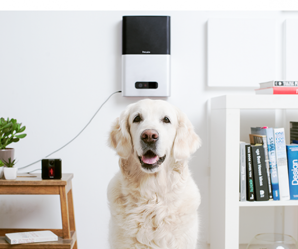 Petcube Lets You Shoot Lasers or Treats at your Pet