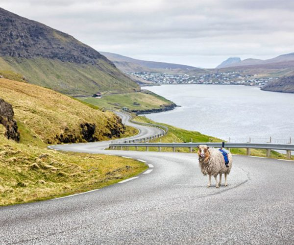 SheepView 360º is Like a Wooly Street View