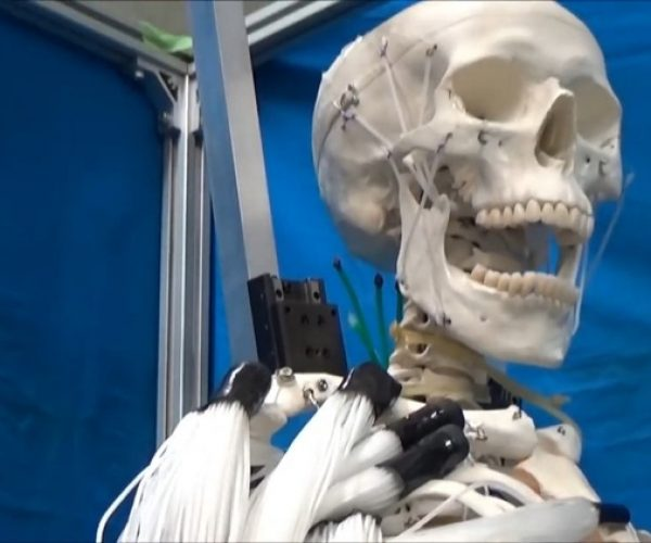 This Robot Skeleton is Driven by Artificial Muscles