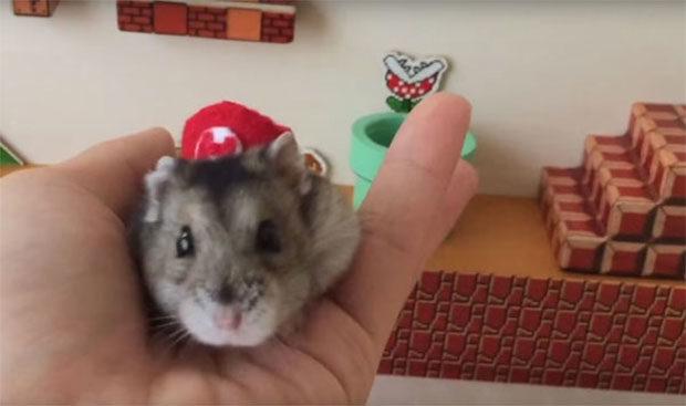 mario-hamster