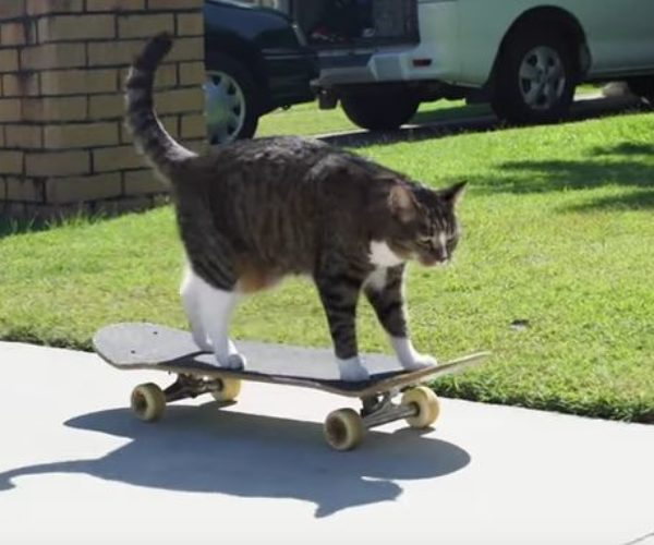 Cat Sets World Record for Most Tricks in One Minute
