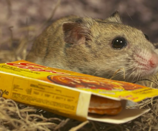 Hamster Things is Stranger Things with Rodents