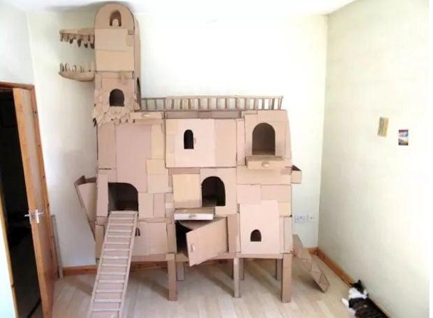 cat_ark_1
