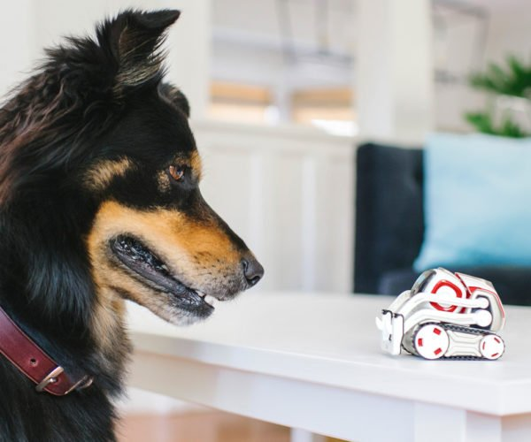 Cozmo Robot Will Soon Recognize Your Pets