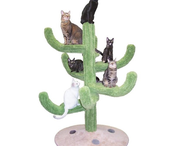 A Cactus for Your Cats: Catctus?