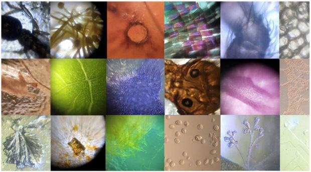 foldscope_5