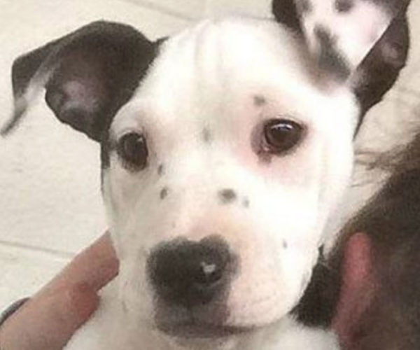 Lucy the Pup has a Picture of her Face on Her Ear: Pupception