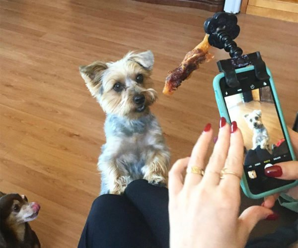 Flexy Paw Makes Taking Perfect Pet Portraits Easy