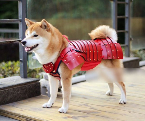 Samurai Pet Armor Protects Dogs from German Shepard Swords