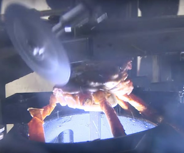 This Robotic Crab Processing Machine Is the Stuff of Nightmares