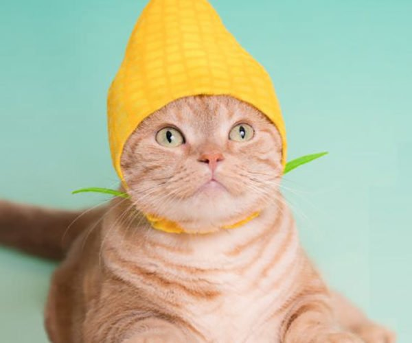 Turn Your Cat into a Vegetable with These Wacky Japanese Hats