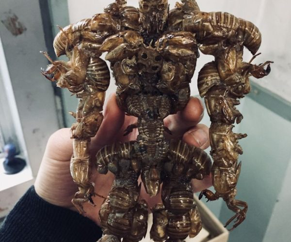 Artist Creates Disturbing Superhero Figures Out of Insect and Crab Shells