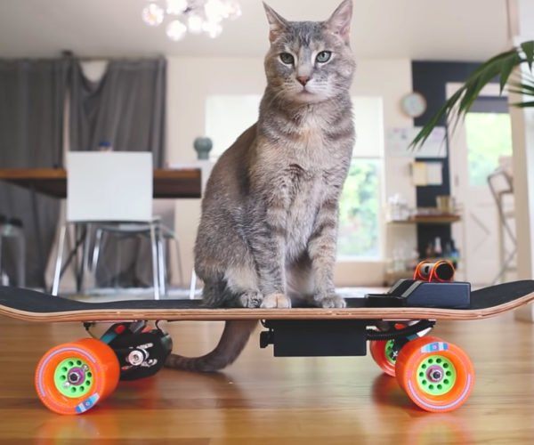 Cat Rides His Own Electric Skateboard