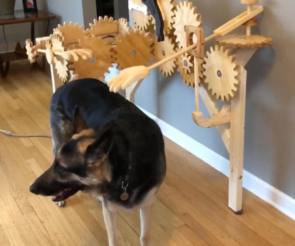 Woodworker Builds Automatic Dog Petting Machine