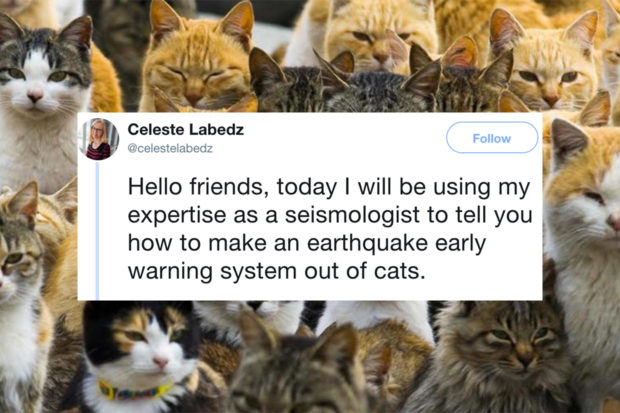 Seismologist Suggests Using Crowdsourced Cat Data to Detect Earthquakes