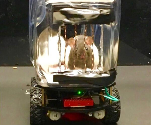 Rats Have Learned to Drive Tiny Cars