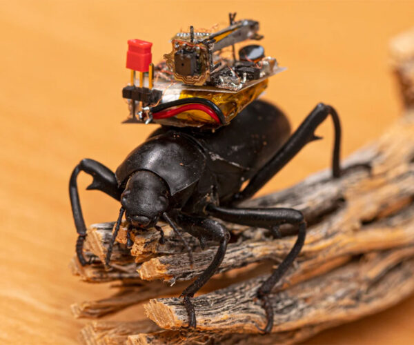 Think a GoPro on Your Dog Is Cool? How About Video Cameras on Beetles?