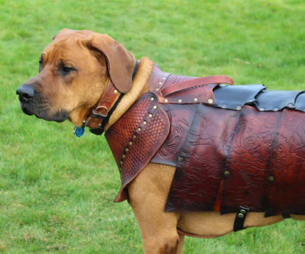 Treat Your Dog to a Custom Leather Suit of Armor