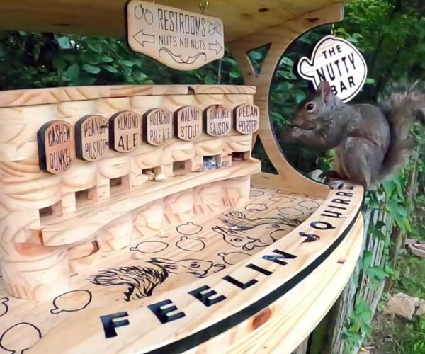 This Guy Built a 7-Variety Nut Bar for Neighborhood Squirrels