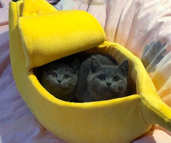 Finally, The Banana Cat Bed Your Cats Have Been Meowing for