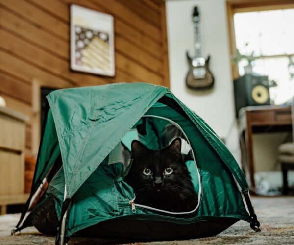 Tiny Tents Let Your Cat Camp Out