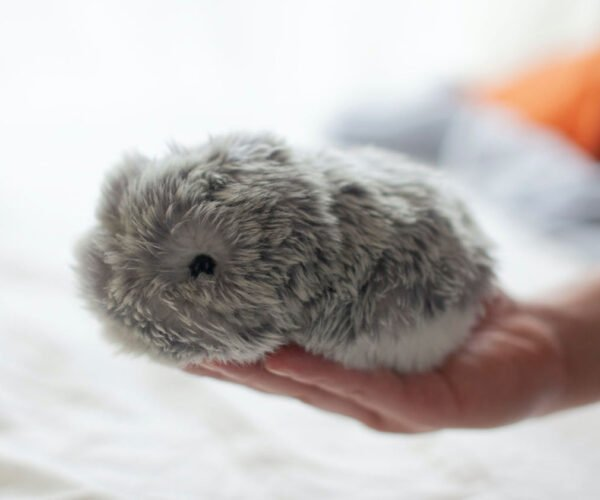 The Moflin is a Tribble-like AI Pet with Emotional Capabilities